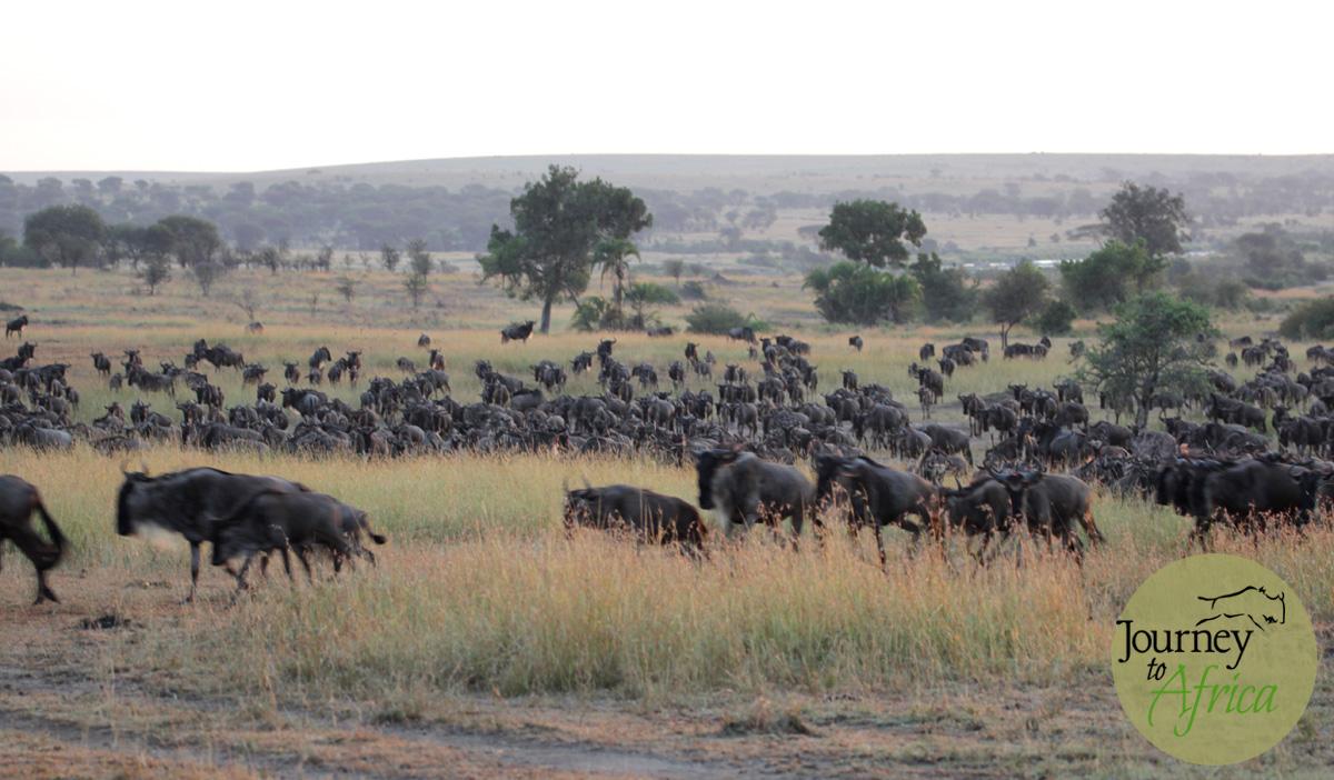 Great_Migration_Northern_Serengeti
