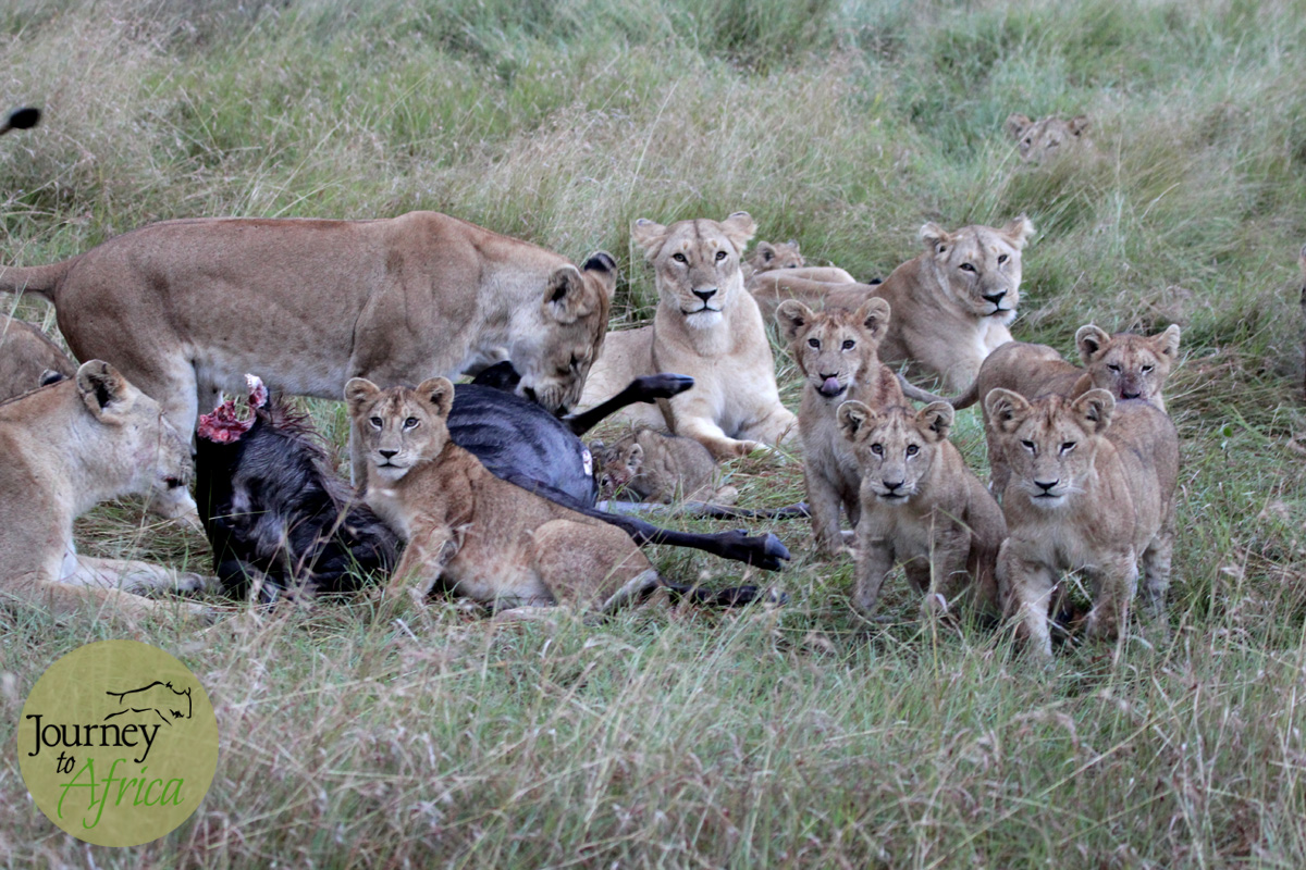 We spent a while enjoying the interactions of this beautiful family in the Northern Serengeti valley.
