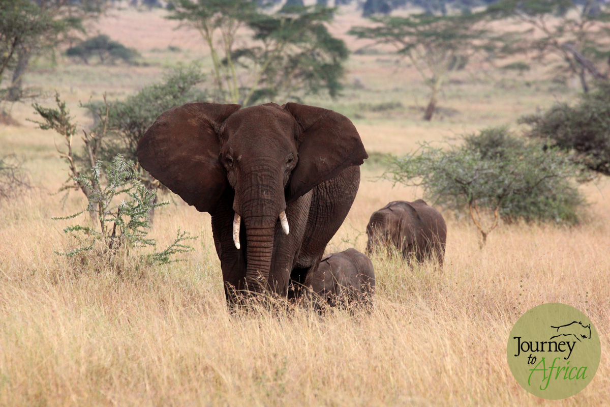 Elephant mama warning us. We hear you mama. We will not harm you and your babies.