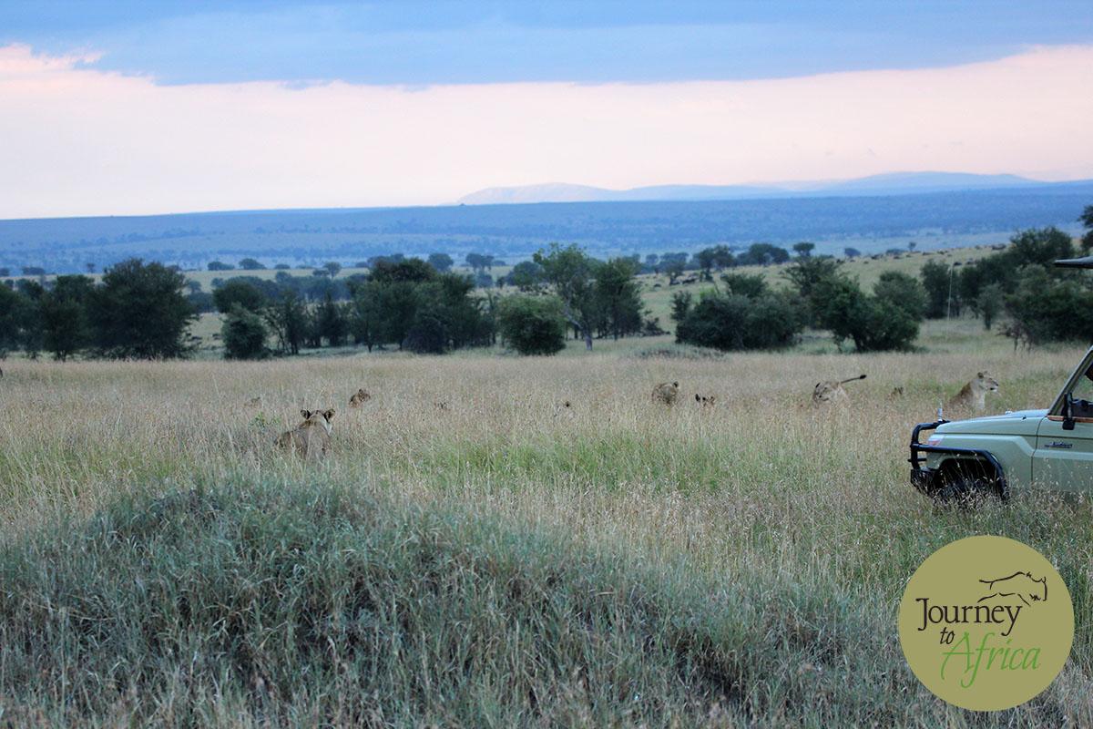 olakira camp in serengeti tanzania