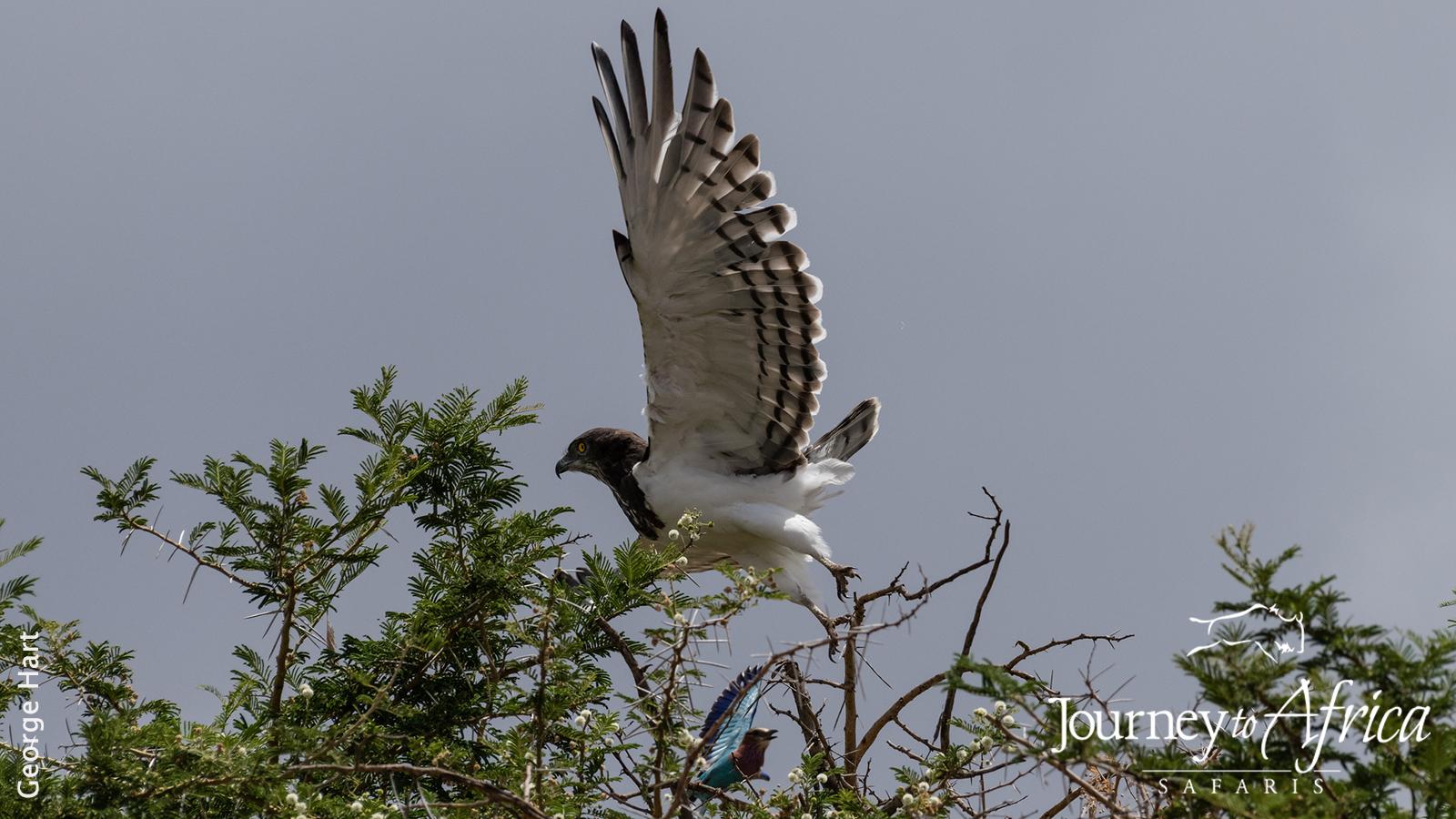 flying_marshall_eagle.jpg