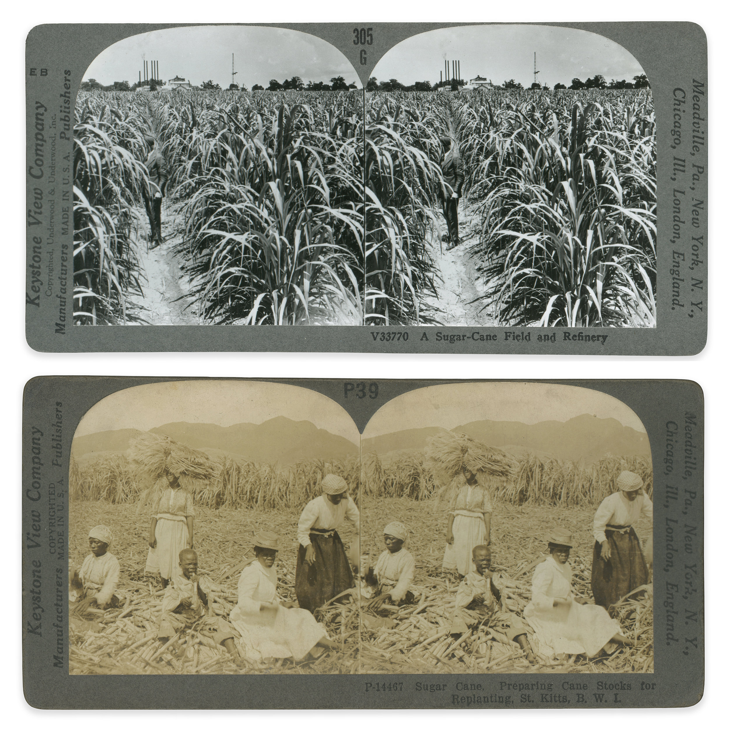 Top: A Sugar Cane Field and Refinery, 19th century, stereoscopic image, Keystone Viewing Company     Bottom: Preparing Cane Blocks for Replanting, St. Kitts, 19th century, stereoscopic image, Keystone Viewing Company