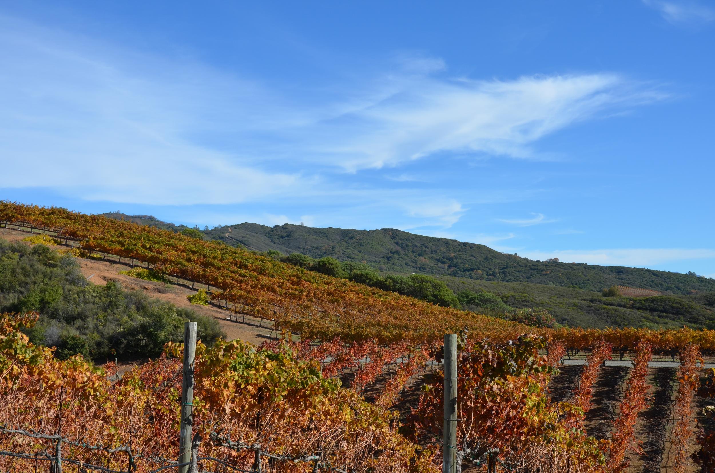 BobDog Winery