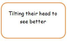 tilting their head.JPG