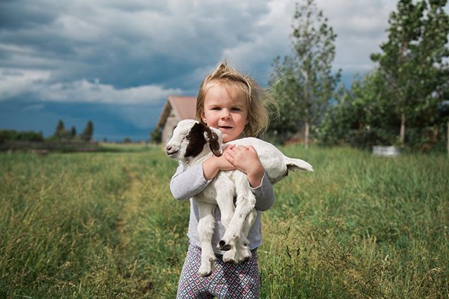 One day old baby goats are everything you think they'd be. We have loved spending time on this farm! More over on my personal account in the stories.
