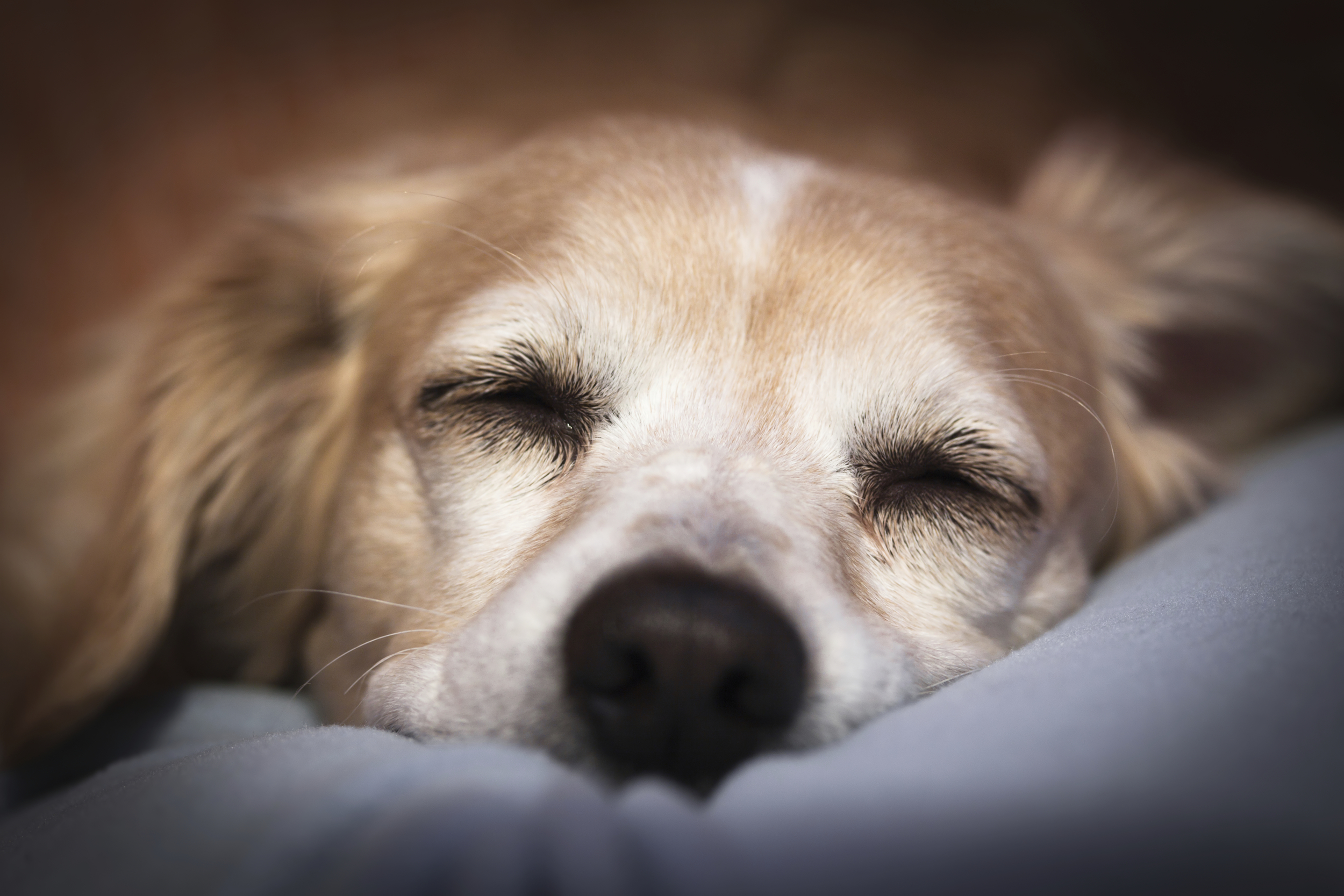 Putting a pet to sleep at home