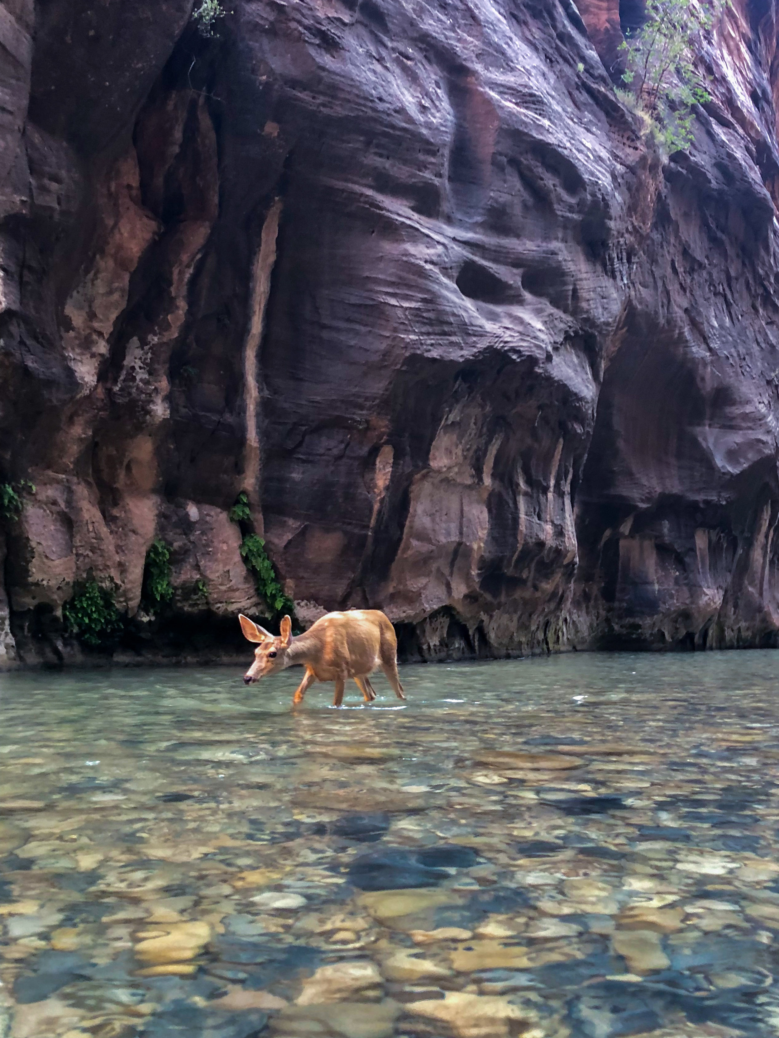 It was dead silent aside from the sound of bubbling water, and all of the sudden this beautiful deer comes walking past us down river. So serene.