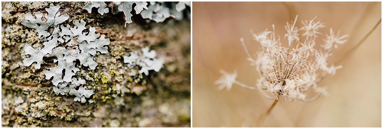 little-story-studio-greensburg-photographer-macro-nature-walk-winter-10.jpg