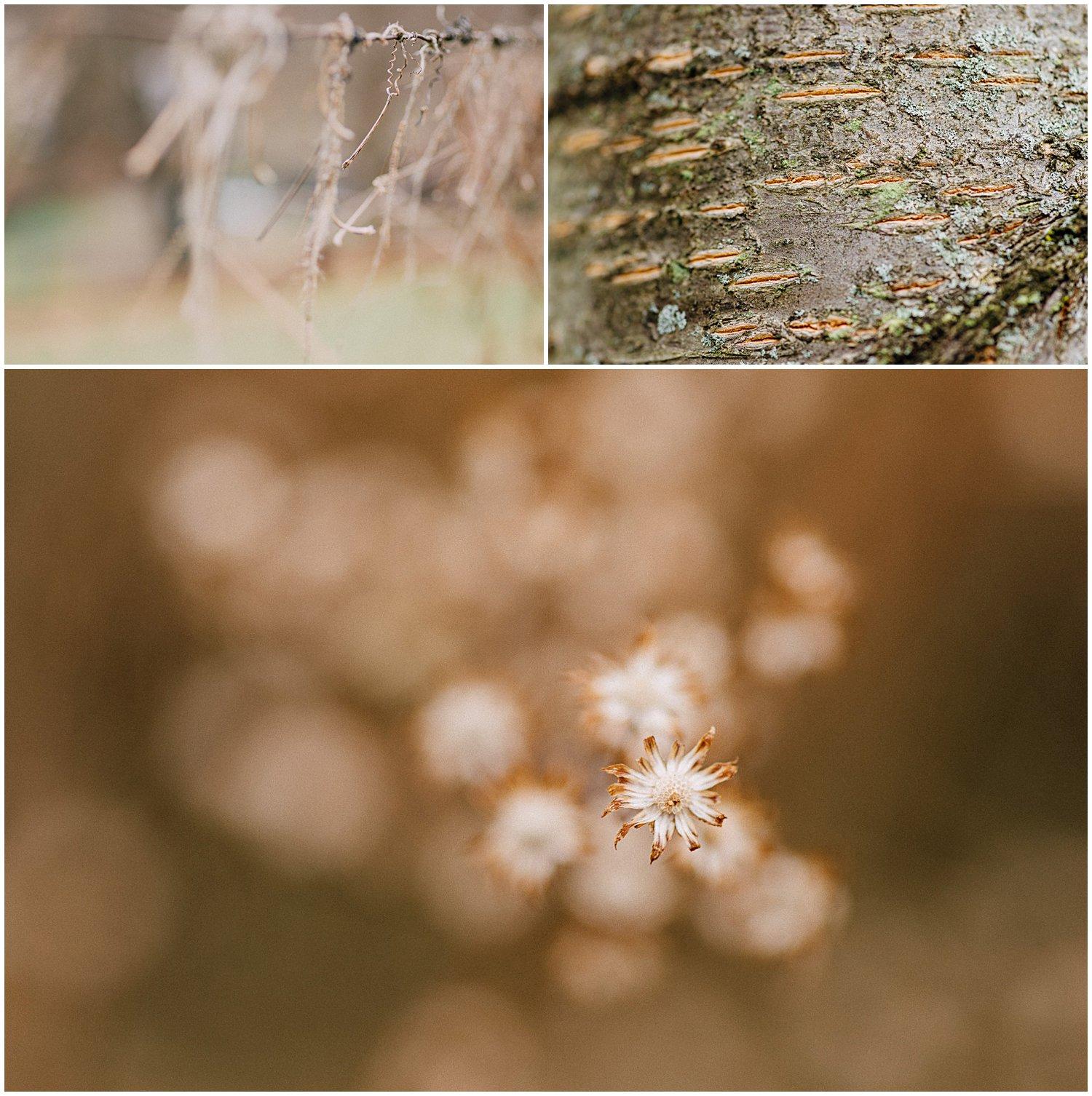 little-story-studio-greensburg-photographer-macro-nature-walk-winter-14.jpg