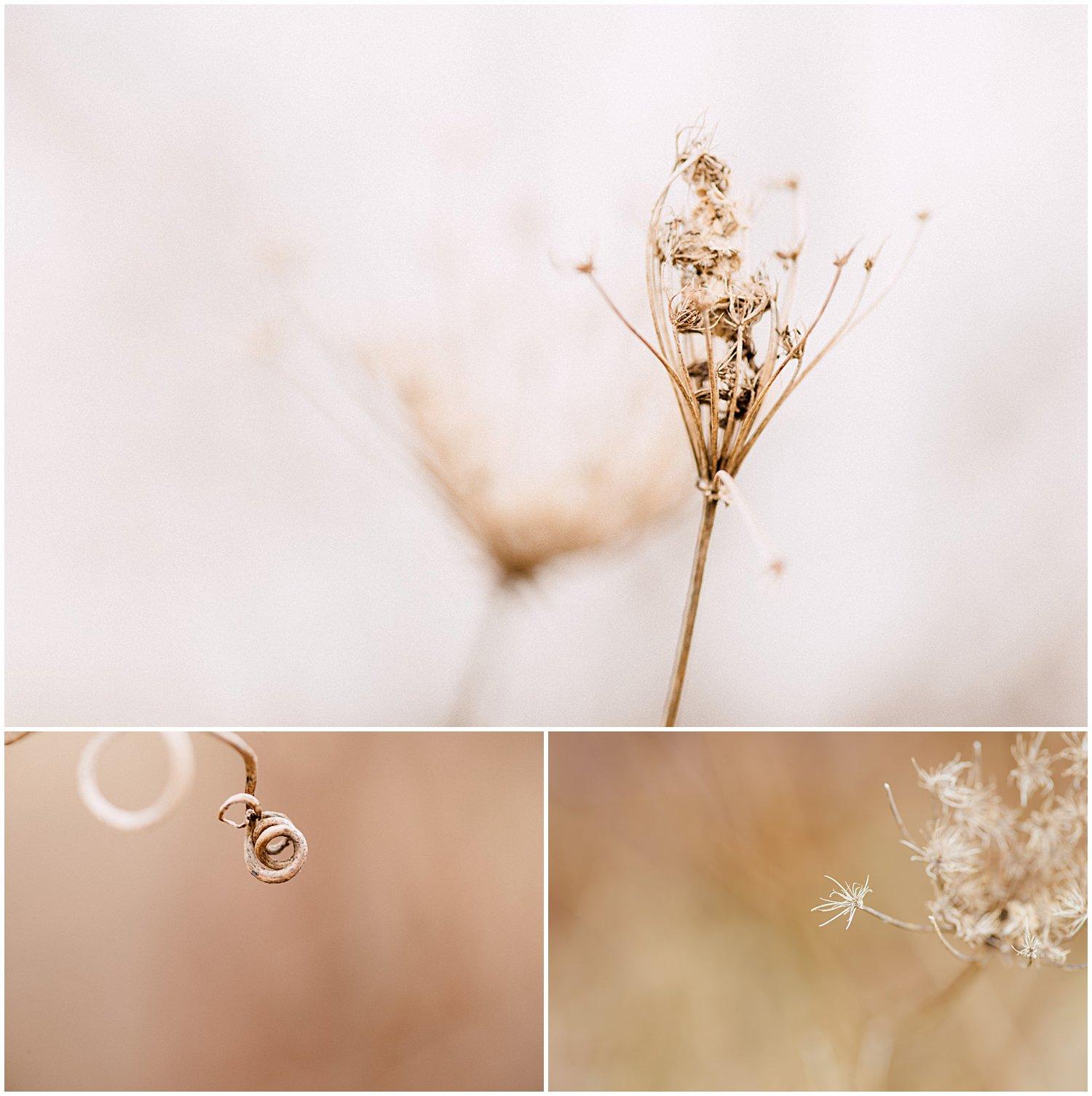 little-story-studio-greensburg-photographer-macro-nature-walk-winter-4.jpg