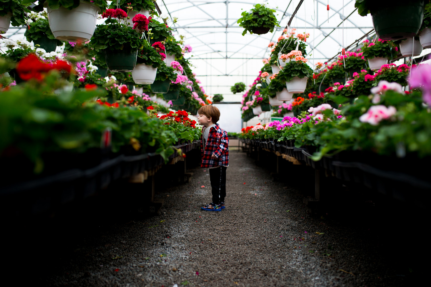 greensburg pa photographer boy smelling flowers in greenhouse