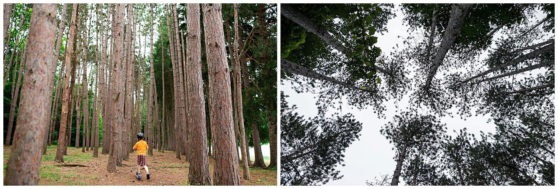 tall trees at Twin Lakes Park