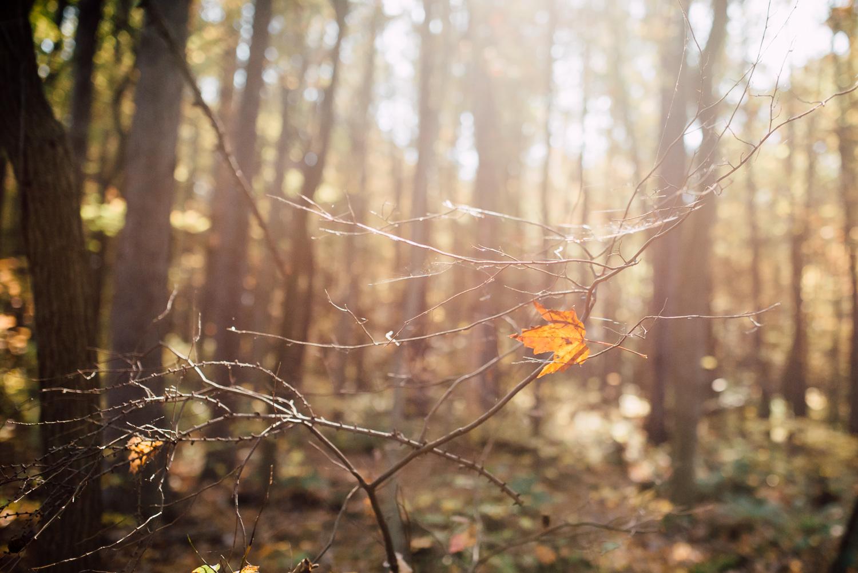 pittsburgh-family-photographer-41.jpg