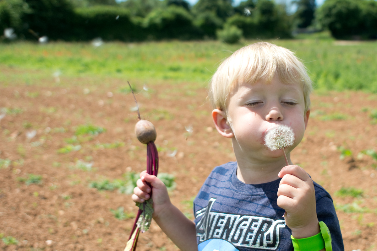 Oh and we dug up a beetroot too. Harrison became a little attached and carried this around for most of the next day. He was also excited to eat beatroot which he wouldnt have even tried if he haddnt picked it himself.