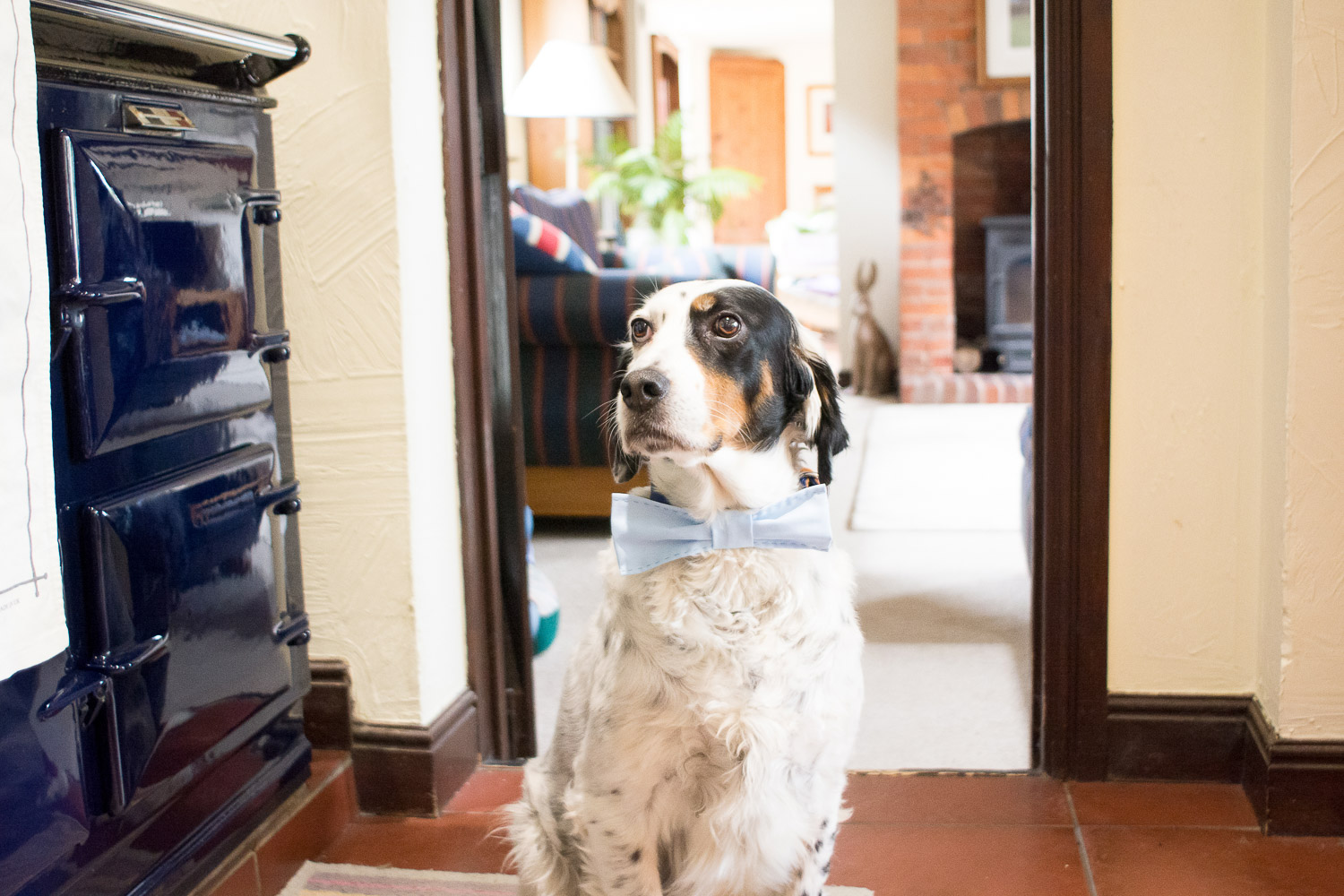 dog wearing a bow tie in the cottage at wedding yurts wedding in leicestershire