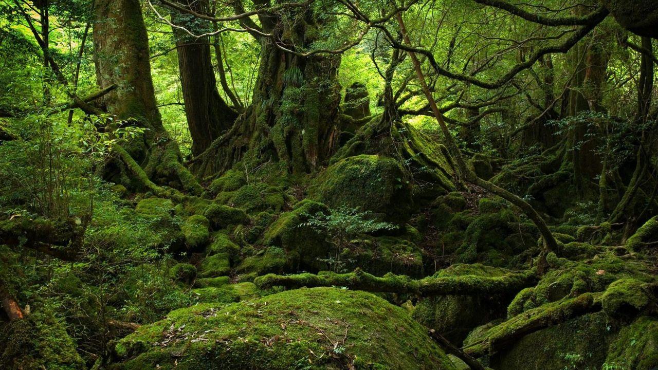 moss-forest-tree (1).jpg