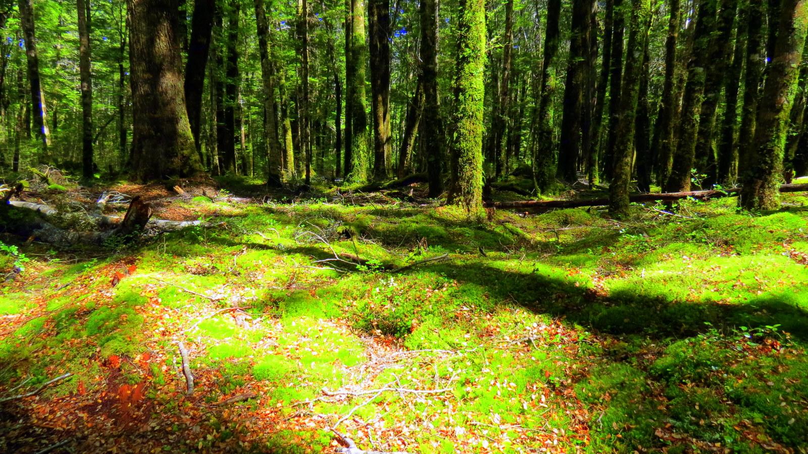 kepler-track-moss-formation.jpg