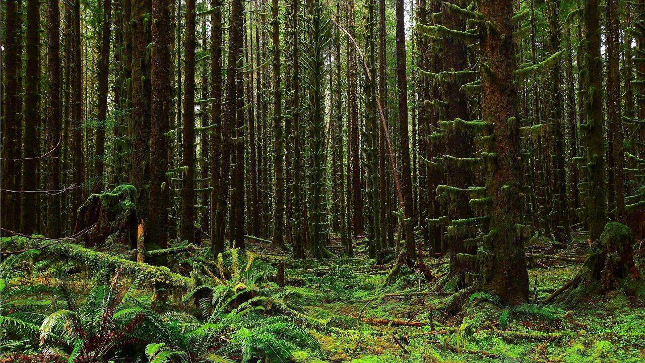 moss-forest-tree.jpg