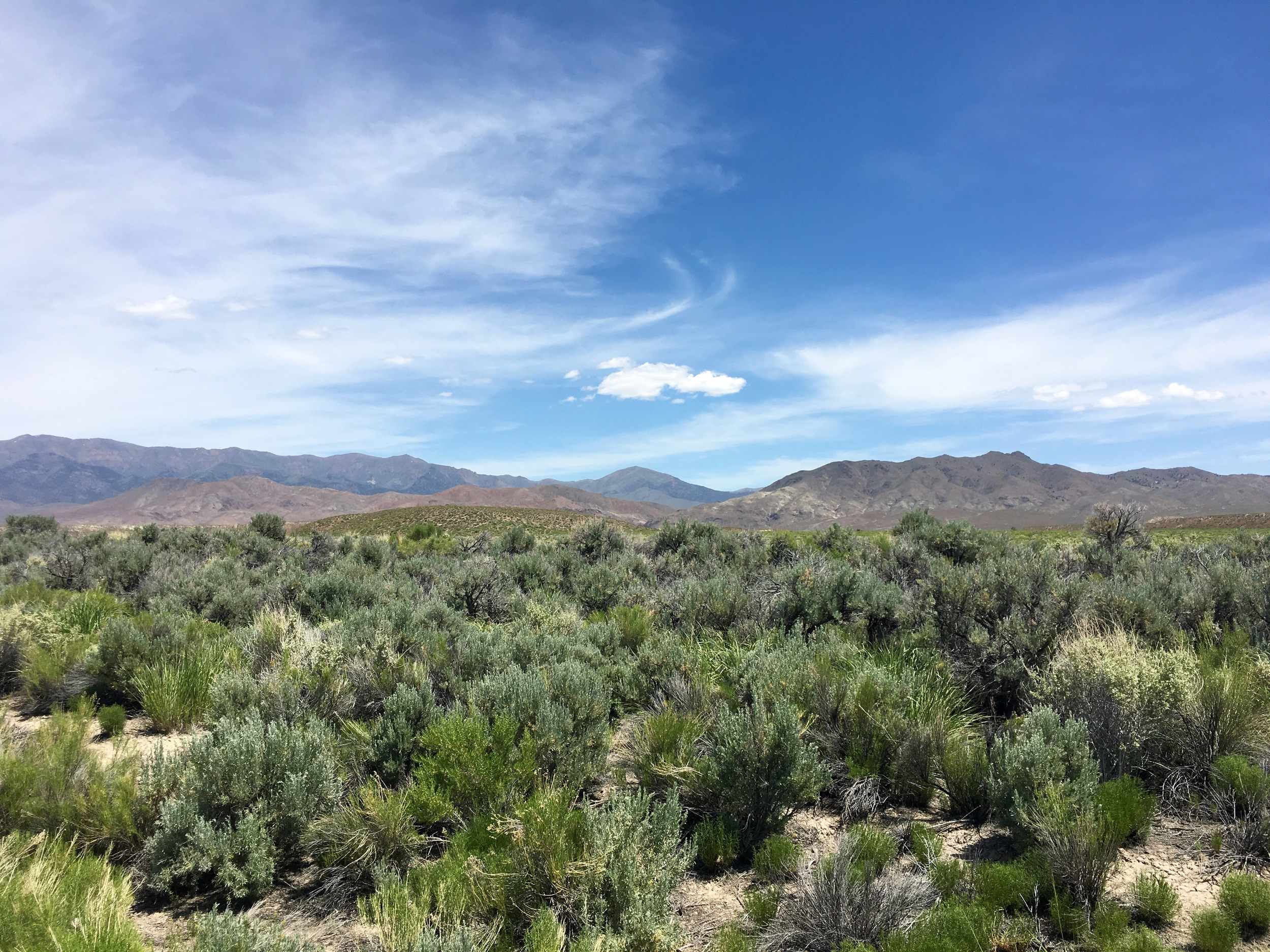 The land west of Fallon has a lot of sagebrush - when i went through the smells were amazing.