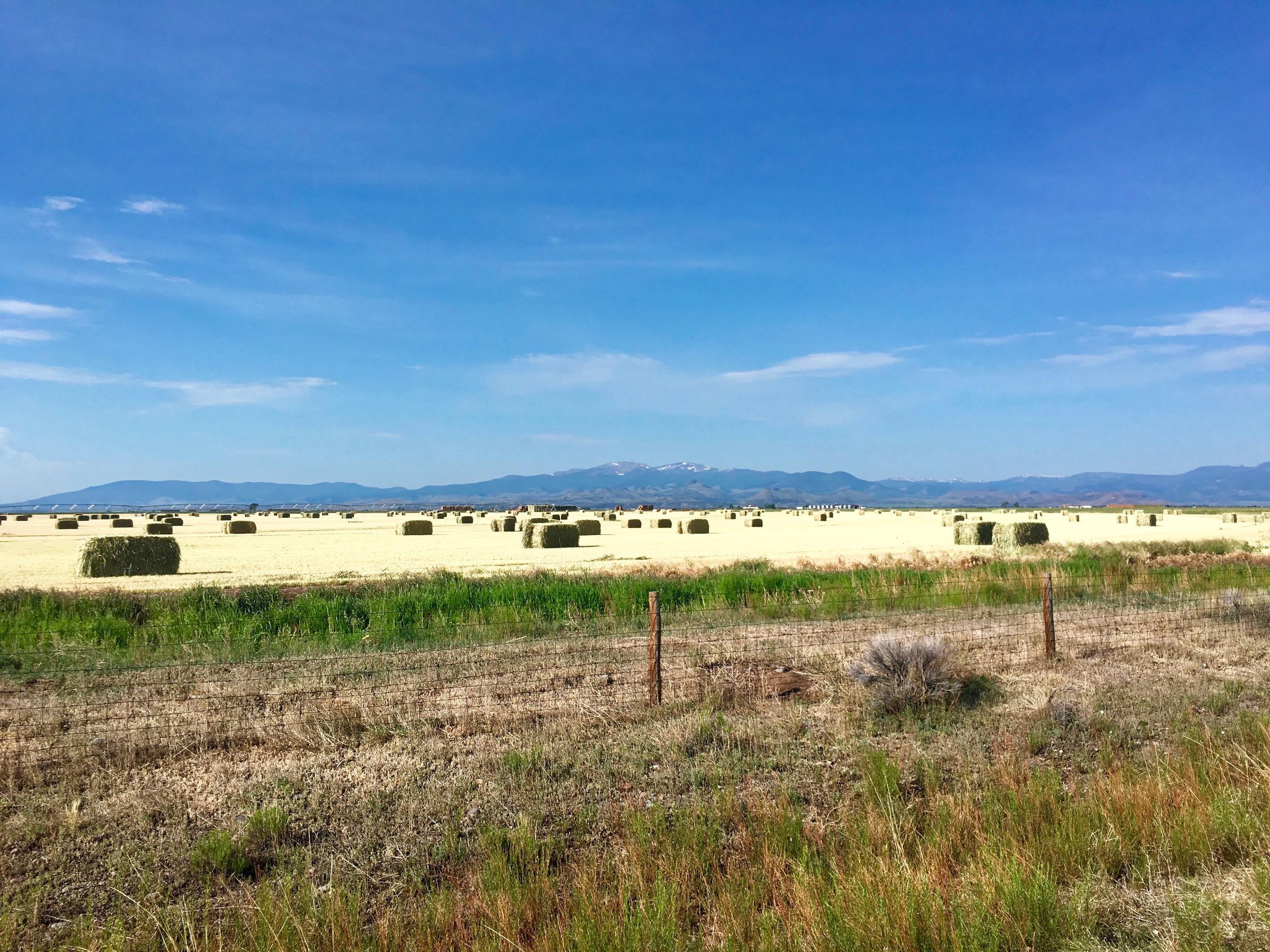 A ranch near Pagosa Springs.