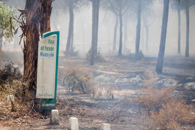 The recent catastrophic forest fire in Portugal.