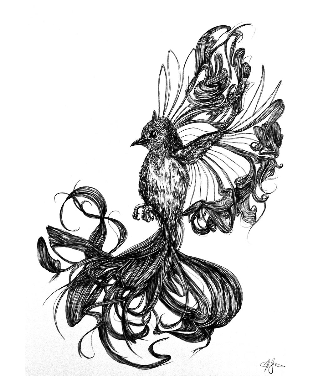 Drawing_Peak_Bird_Hair_2013-helenagrimes.jpg