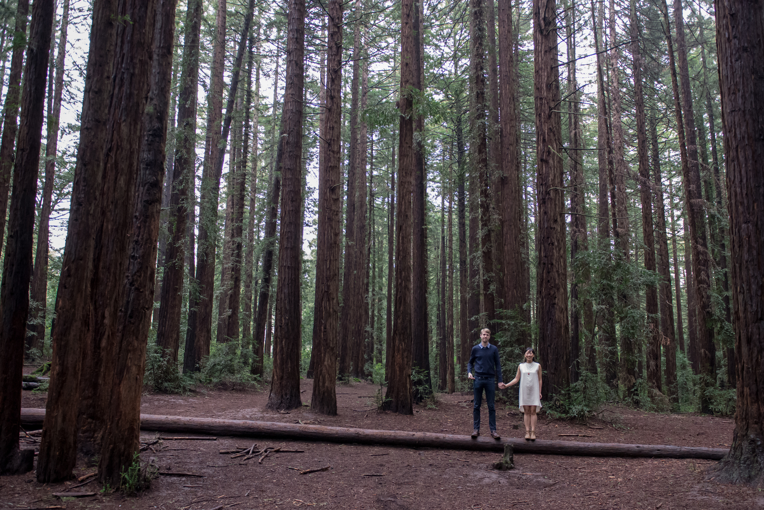 oakland-museum-redwood-forest-engagement-vc13.jpg