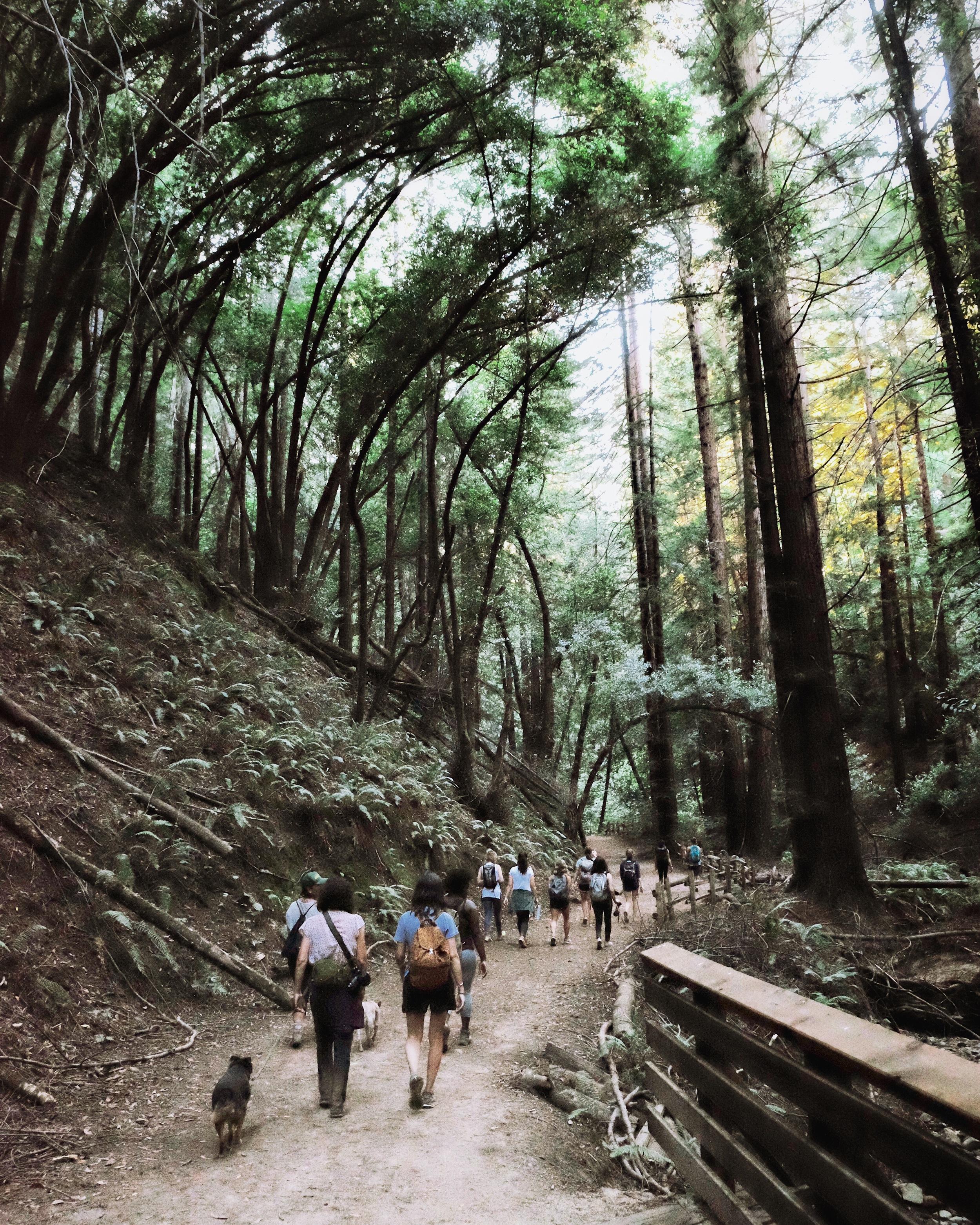 she-explores-oakland-redwood-regional-park.jpg