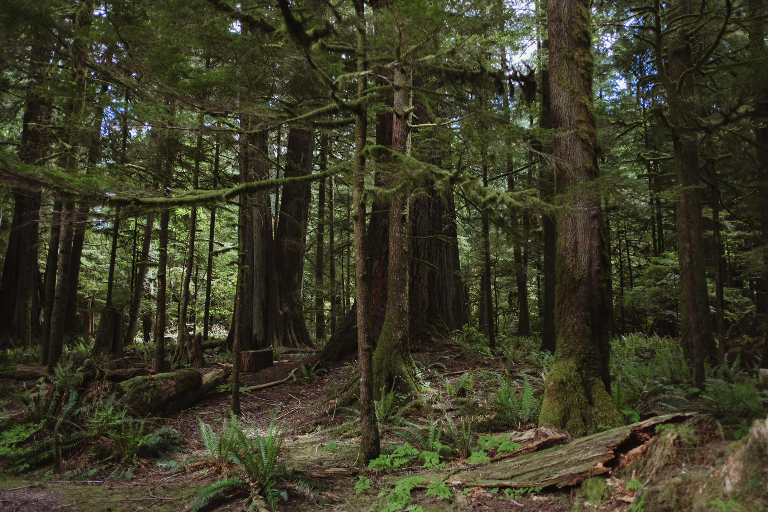 Cathedral Grove, MacMillian Provincial Park
