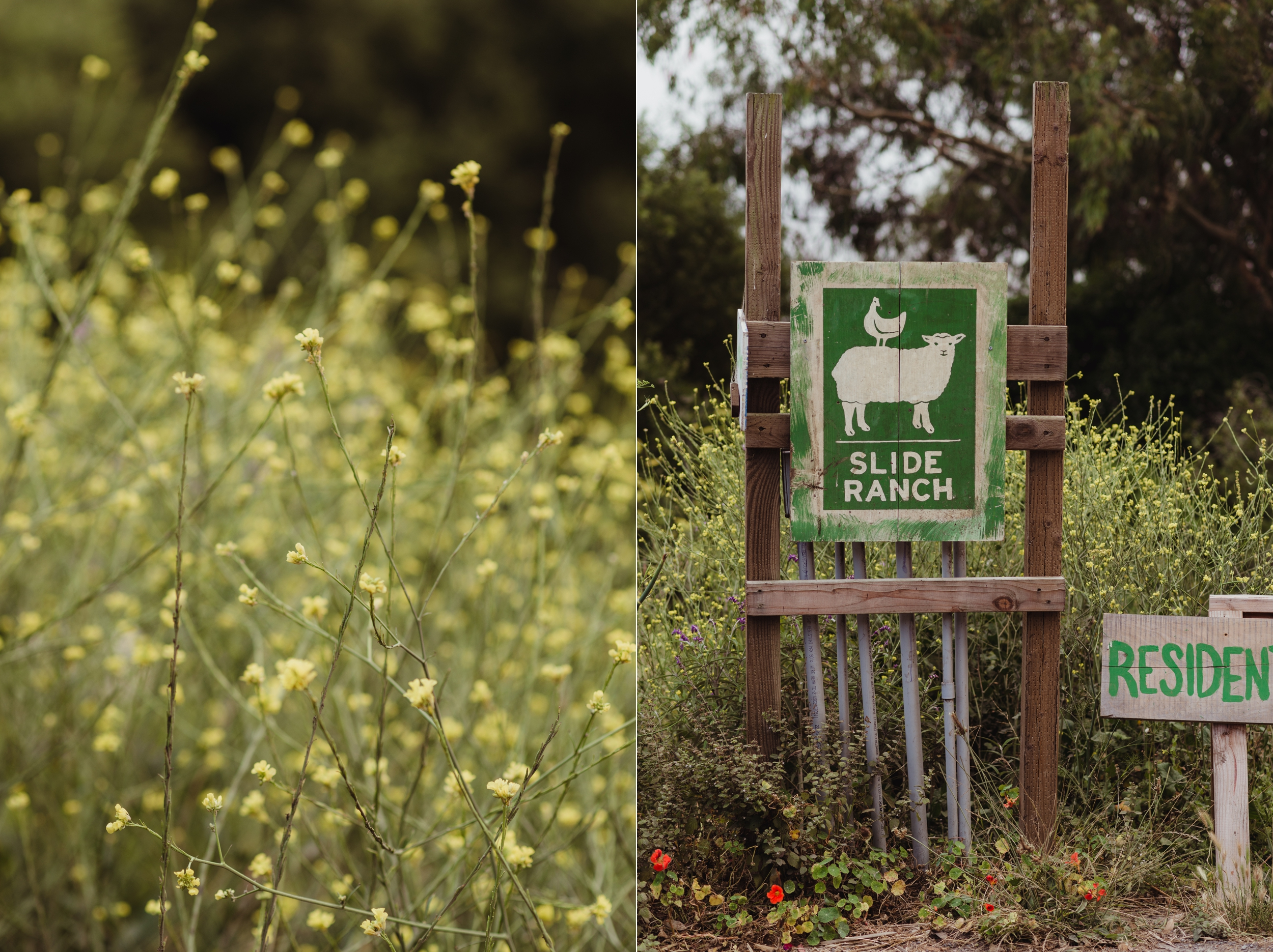 slide-ranch-engagement-photographer-vivianchen-0006_WEB.jpg