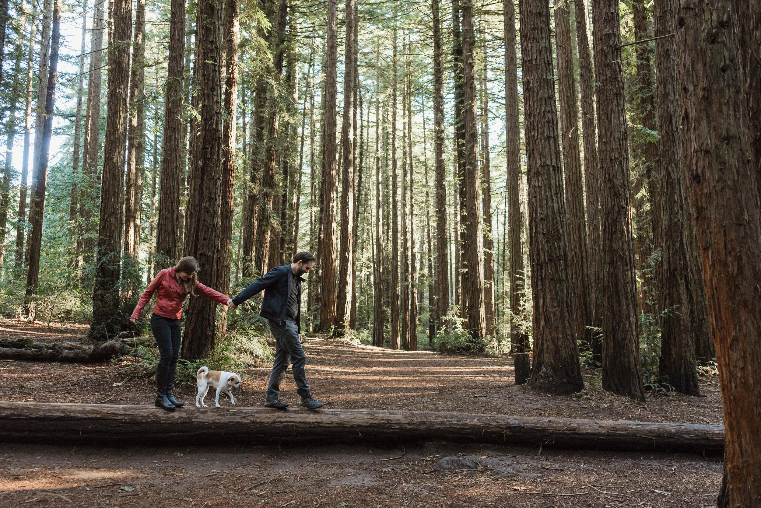 oakland-joaquin-miller-park-redwood-grove-engagement-session-vivianchen-019.jpg