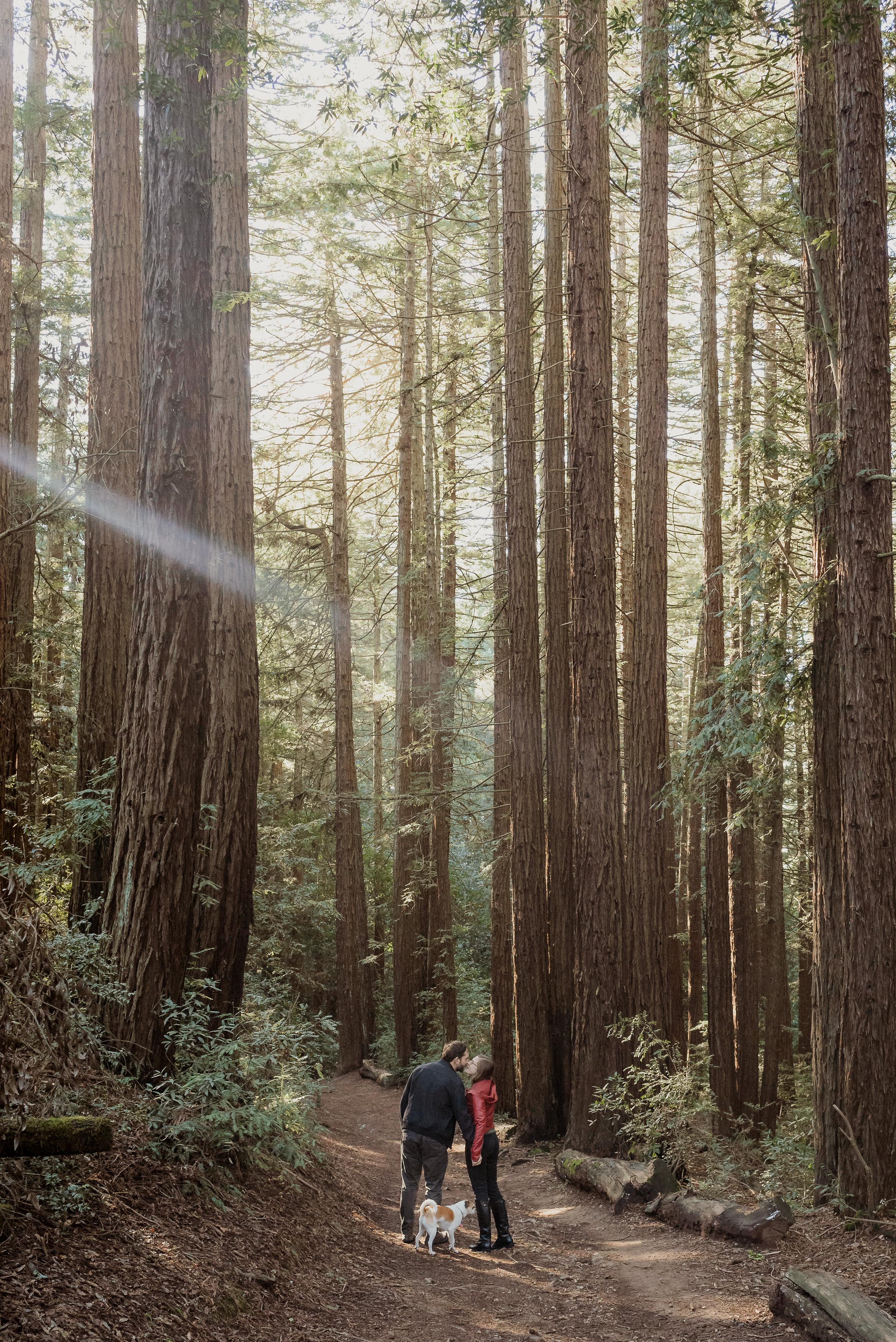 oakland-joaquin-miller-park-redwood-grove-engagement-session-vivianchen-111.jpg