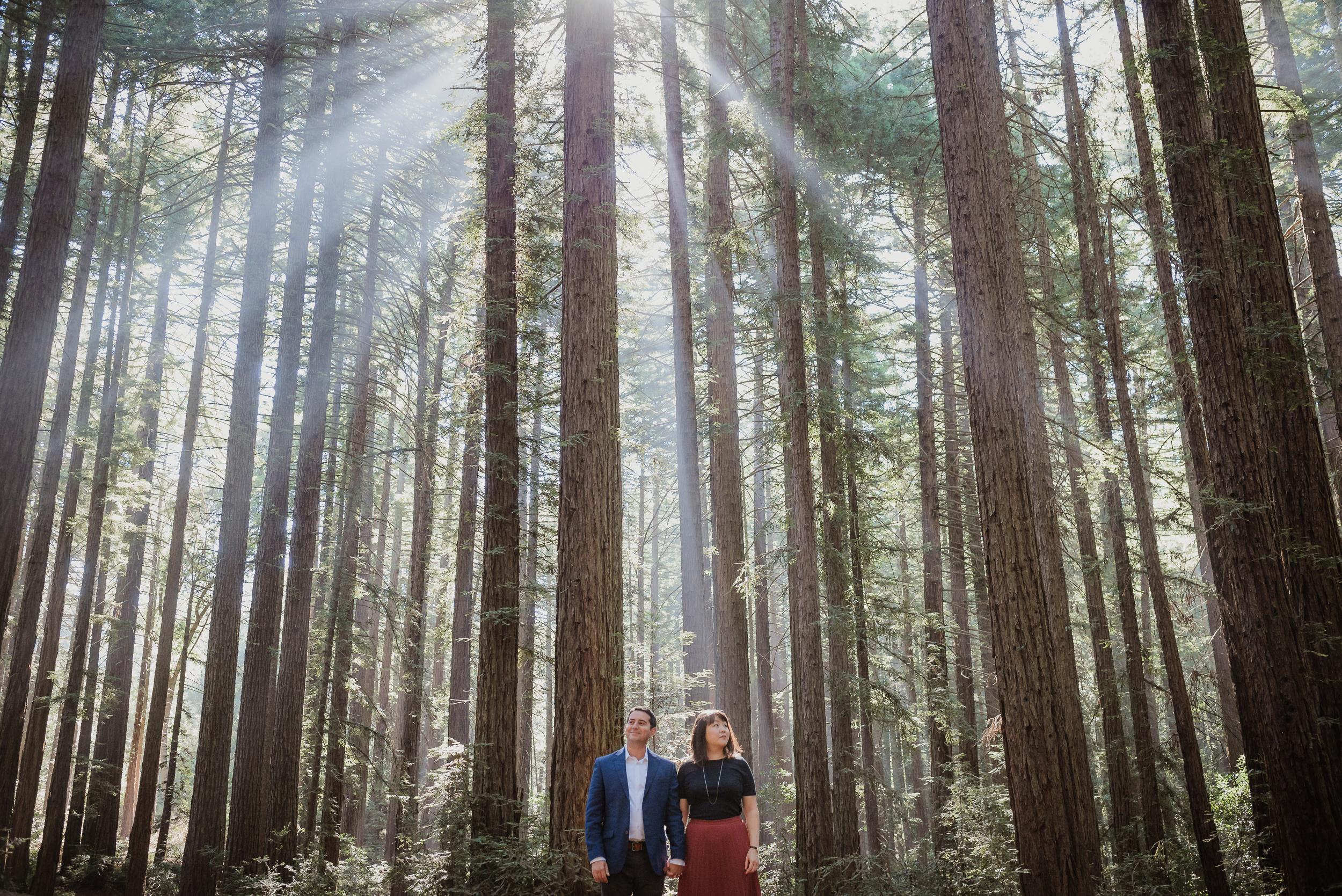 oakland-redwood-engagement-session-photographer-vivianchen-035.jpg