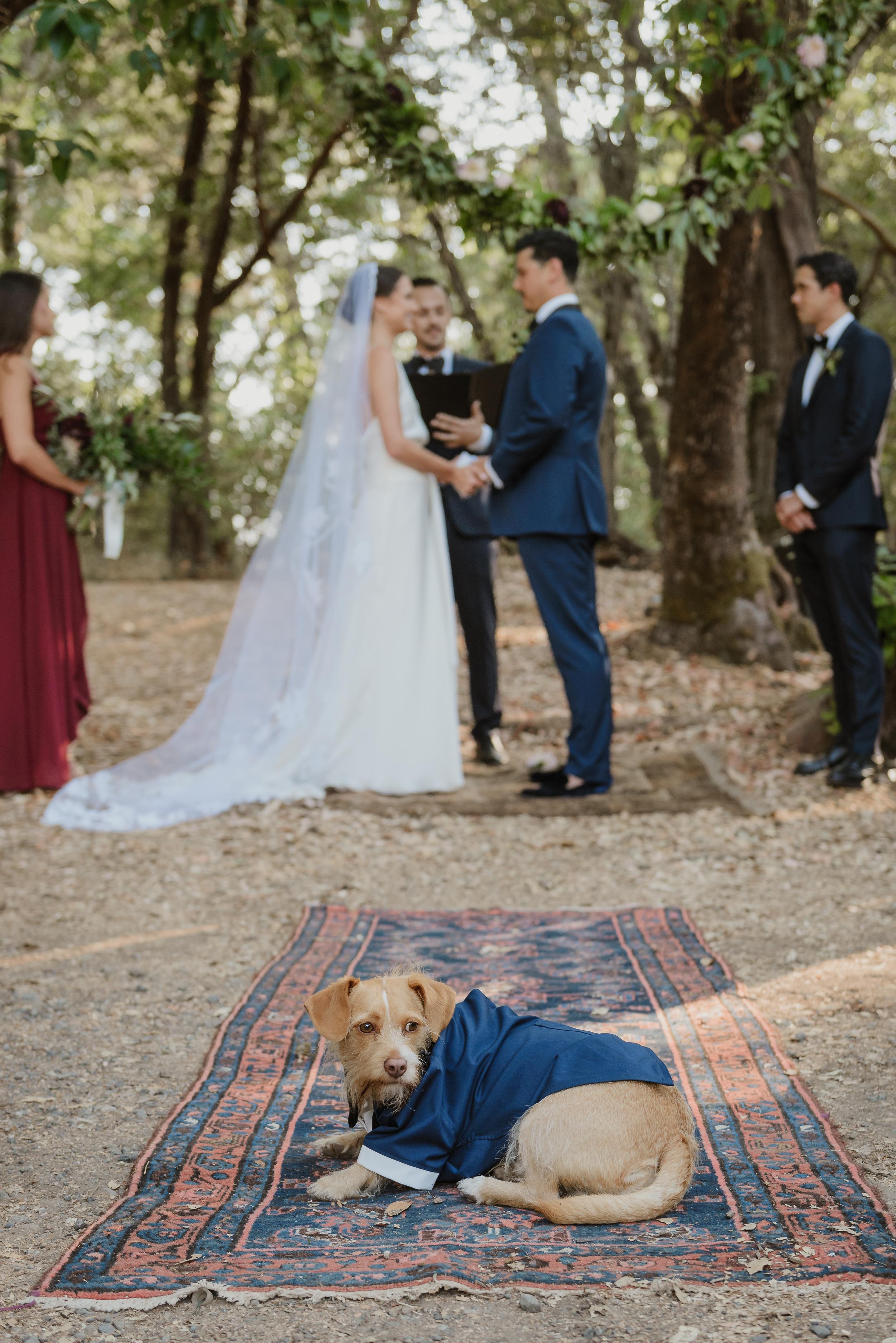 41-ukiah-yokayo-ranch-fall-wedding-vivianchen-265.jpg
