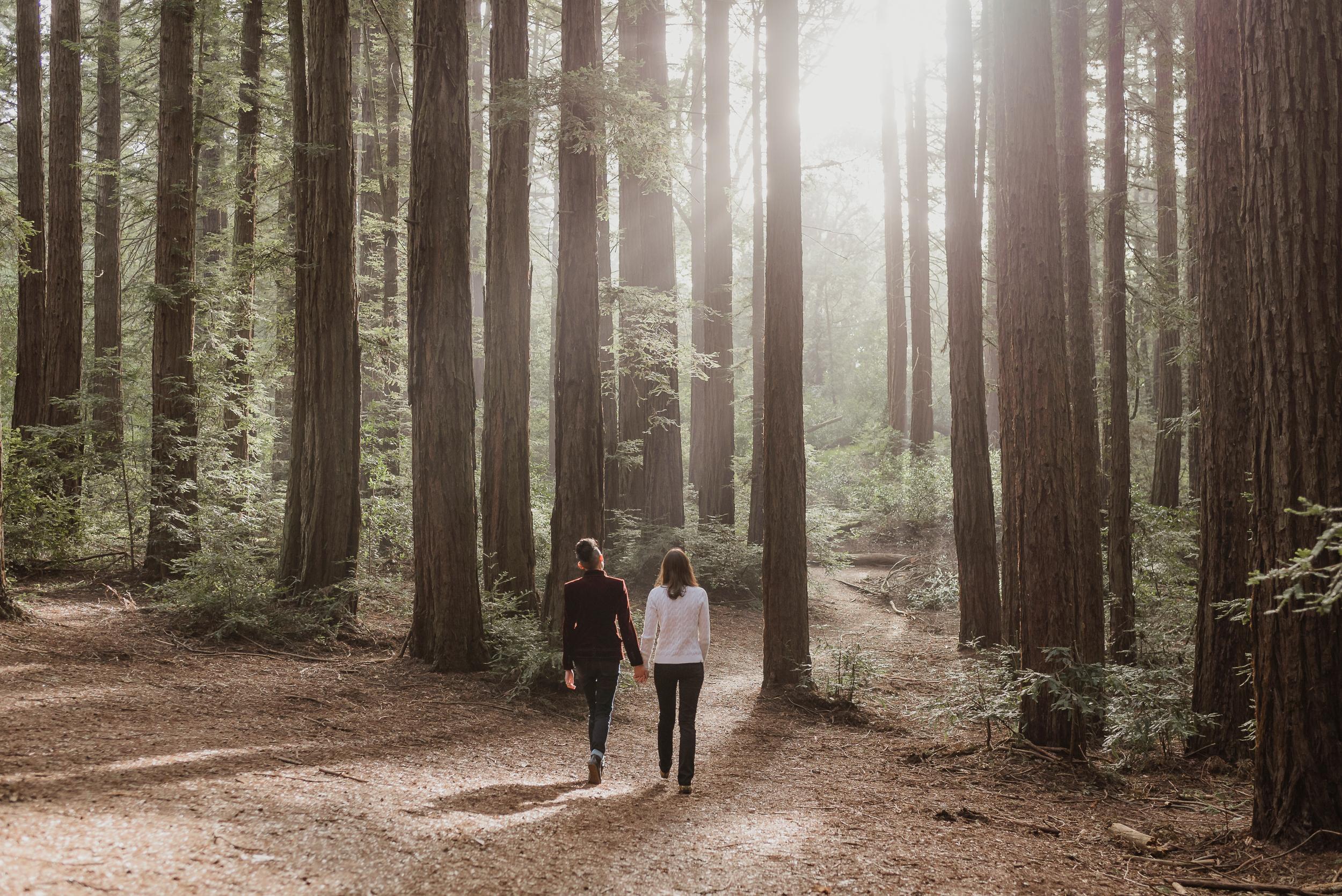 Redwood Regional Park/Joaquin Miller Park, Oakland
