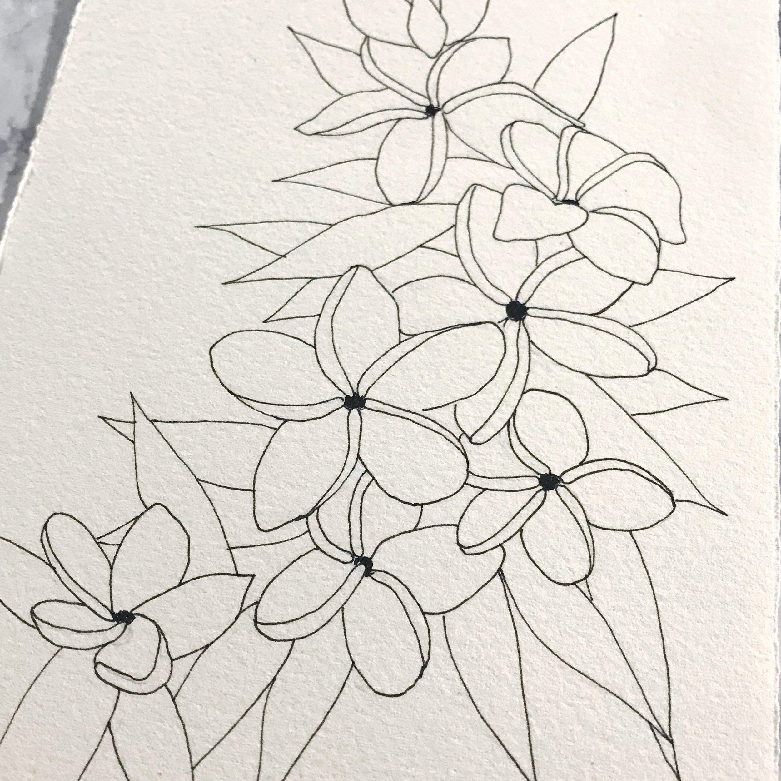 Plumeria flowers drawn on Arches Cold Press paper, by danielleandco.com