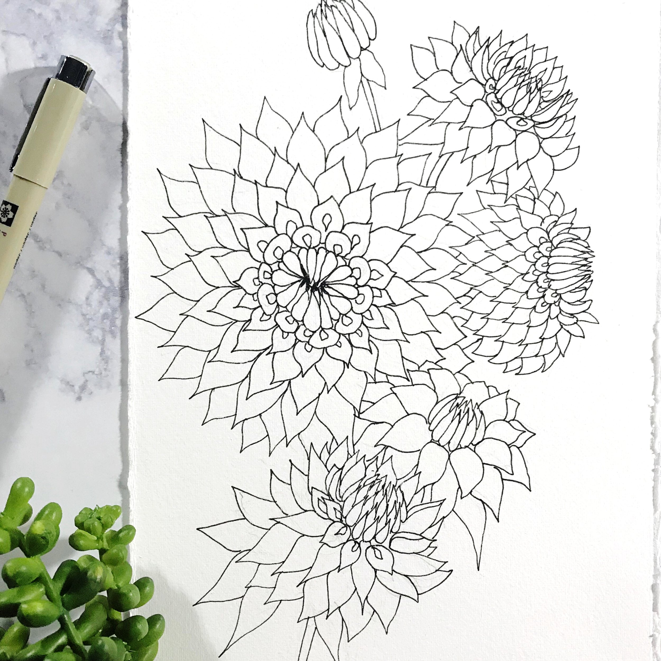Dahlia flowers drawn on Canson Heritage Hot Press paper, by danielleandco.com