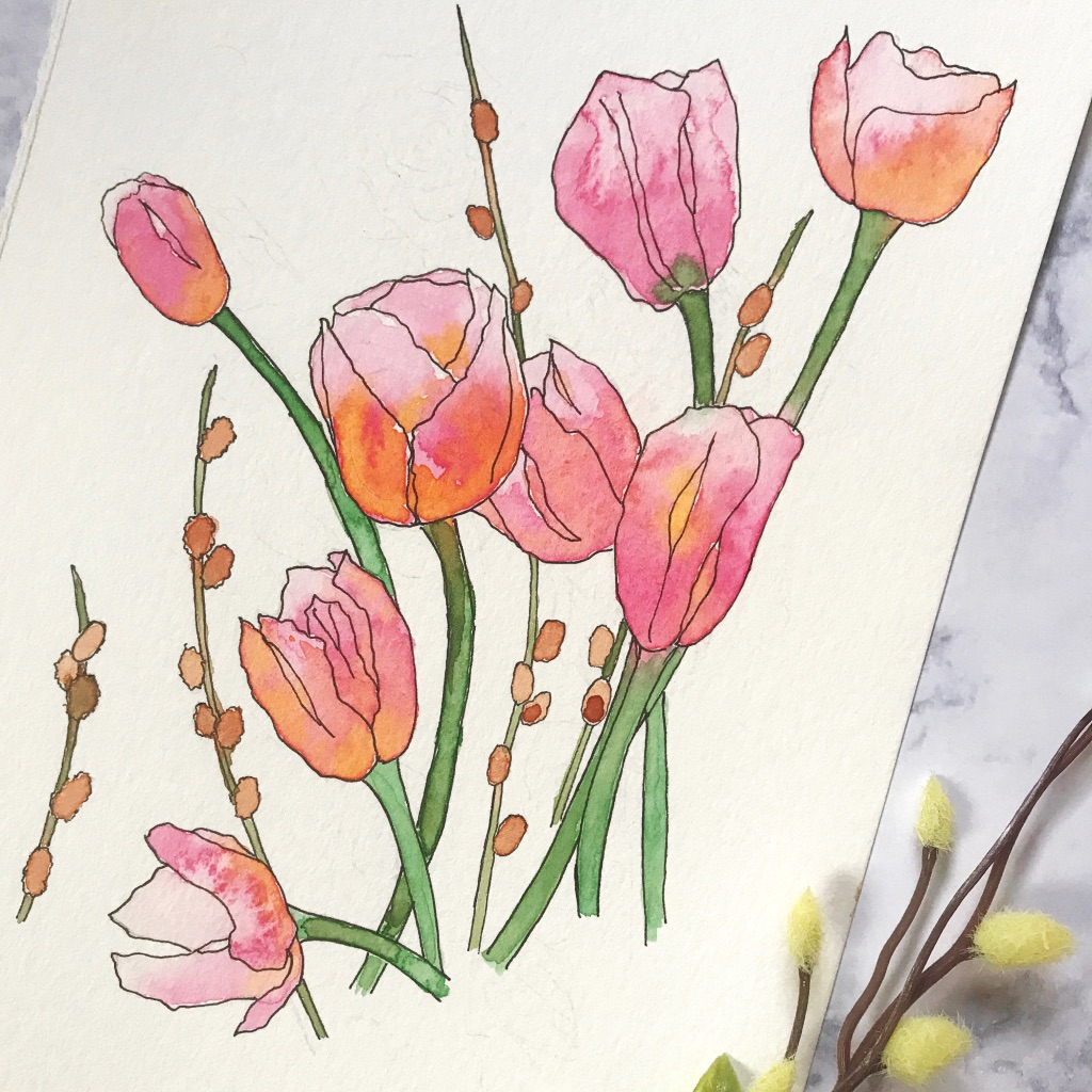 Tulip flowers and pussy willow drawn & painted on Canson XL Watercolor paper, by danielleandco.com