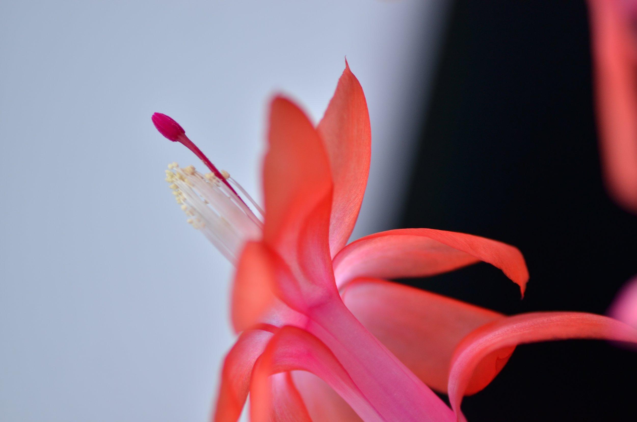 DSC_1395_NoHo_arthouse_flower_16.jpg