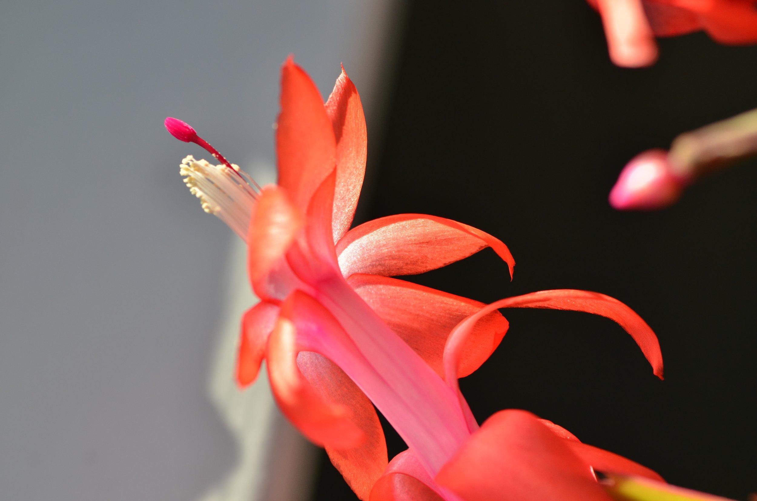DSC_1413_NoHo_arthouse_flower_16.jpg