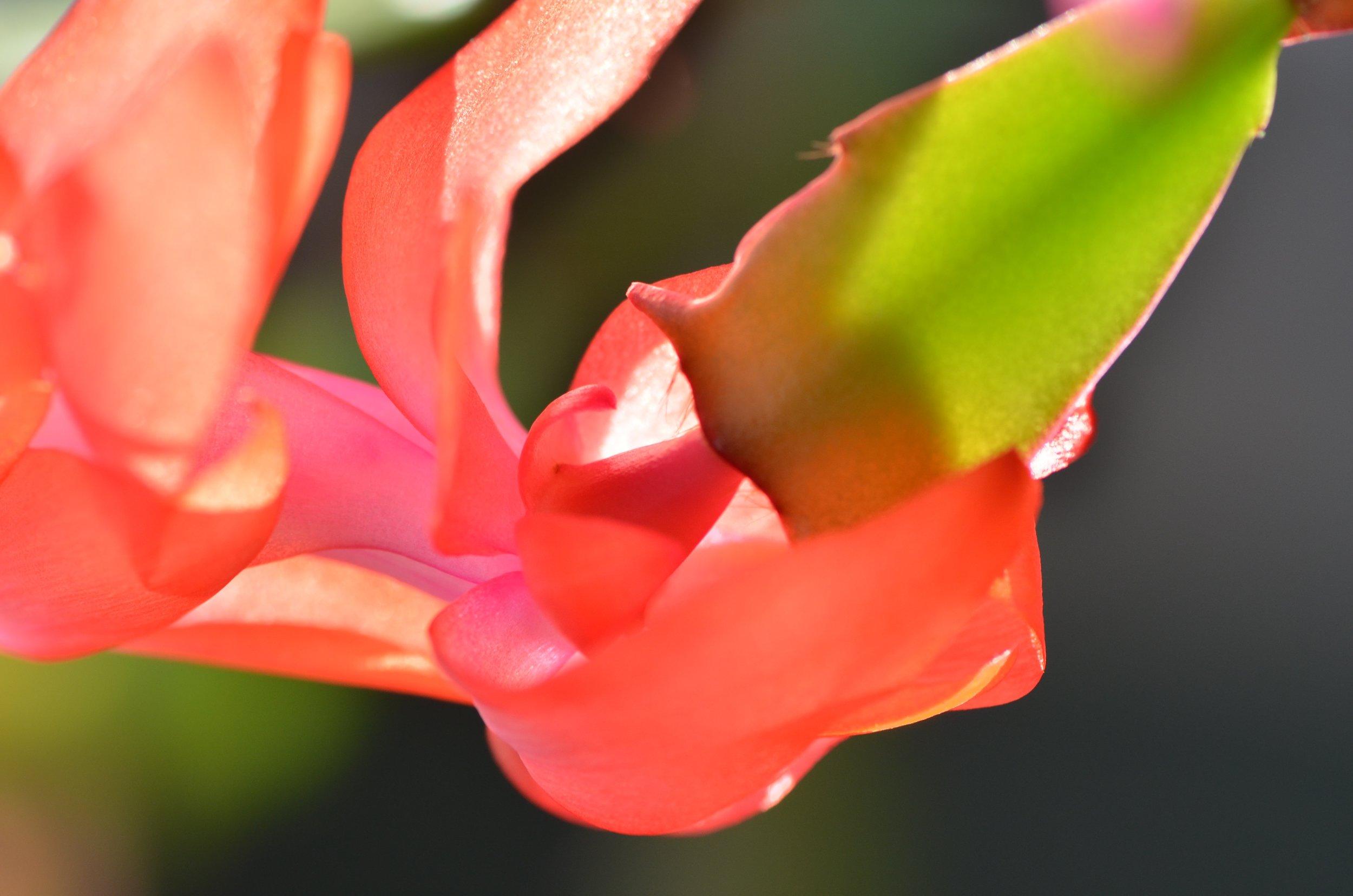 DSC_1419_NoHo_arthouse_flower_16.jpg