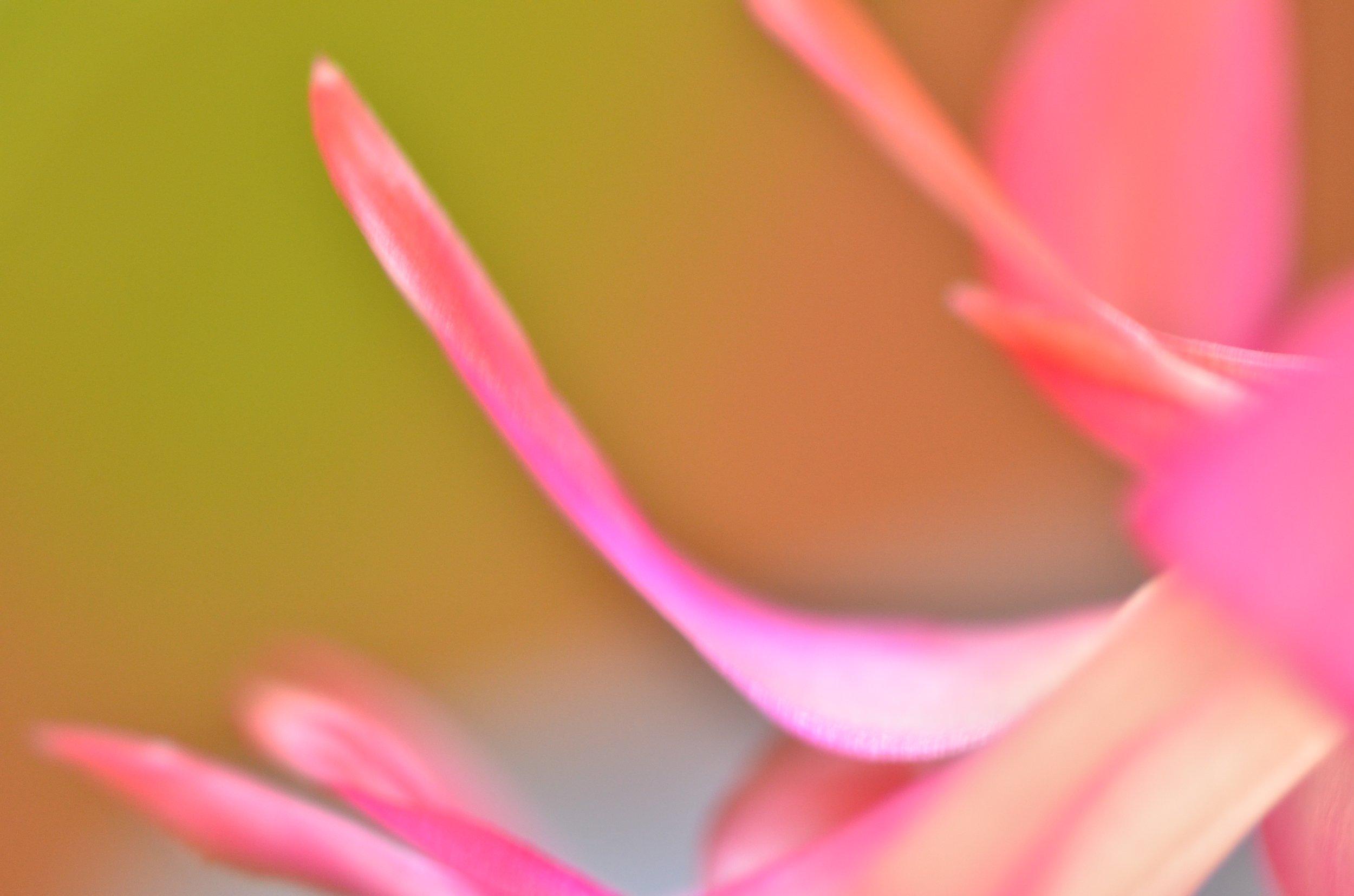 DSC_1417_NoHo_arthouse_flower_16.jpg