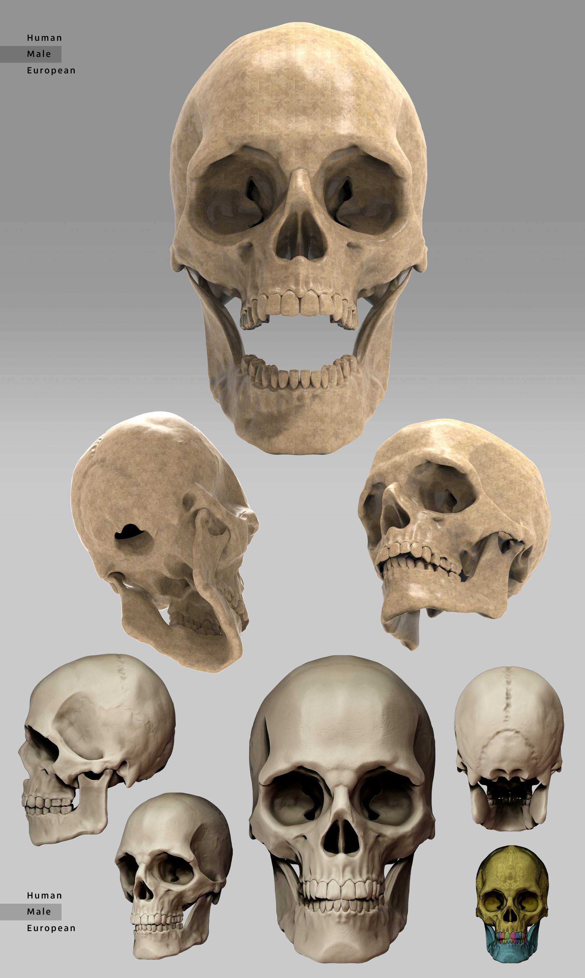 Geral Todas Skull.jpg