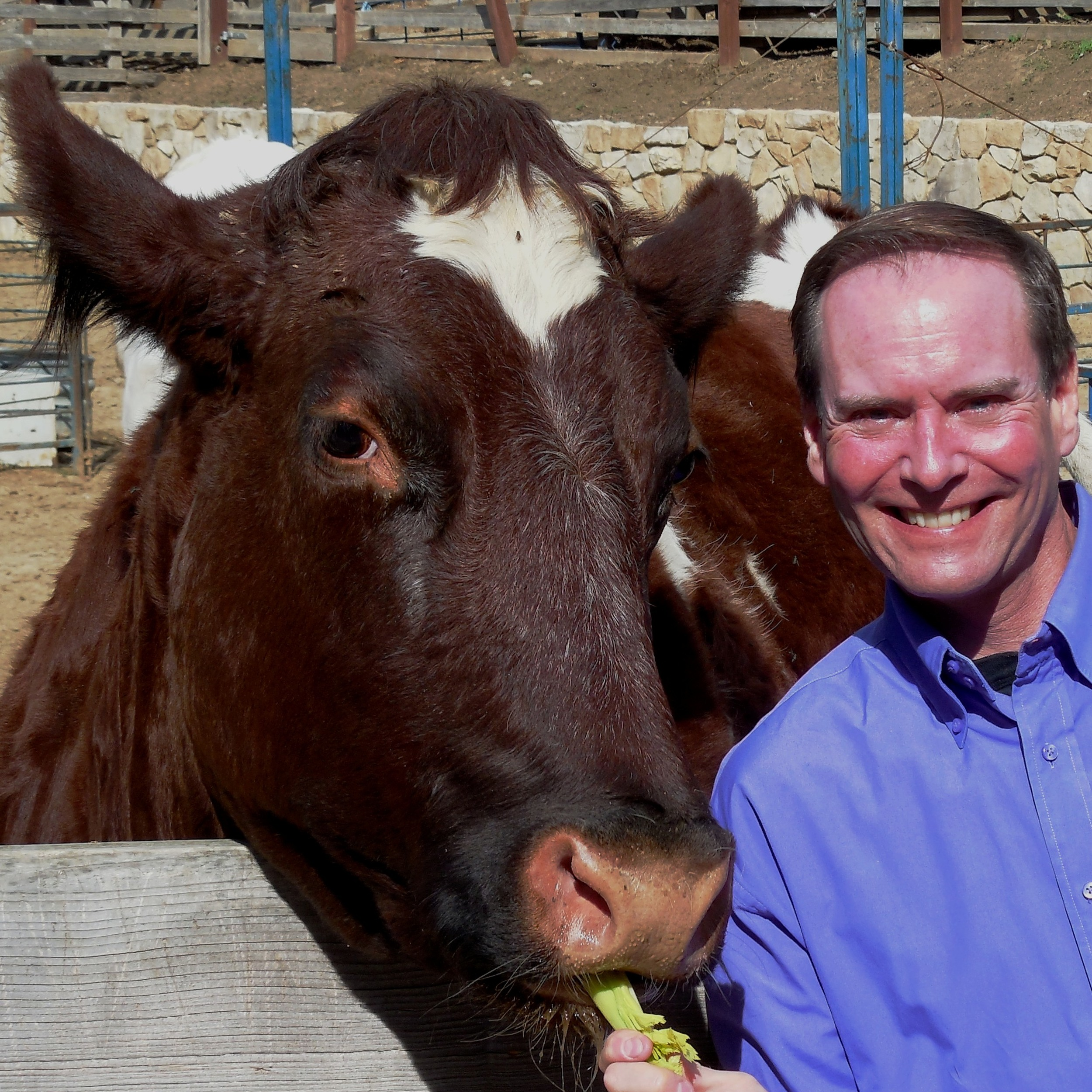 he head herder treating a happy cow- click above - to go to his linkedin profile
