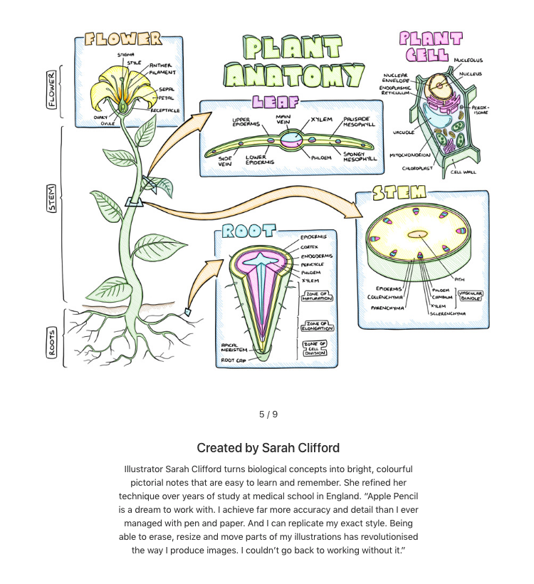 Sarah Clifford  has a very classic sketchnote style, with a fascinating focus on scientific and biological subject matter. her work reminds me of old fashioned field guide drawings.