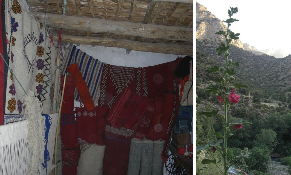 Weaving centre and a hollyhock outside my bedroom window at the gite.