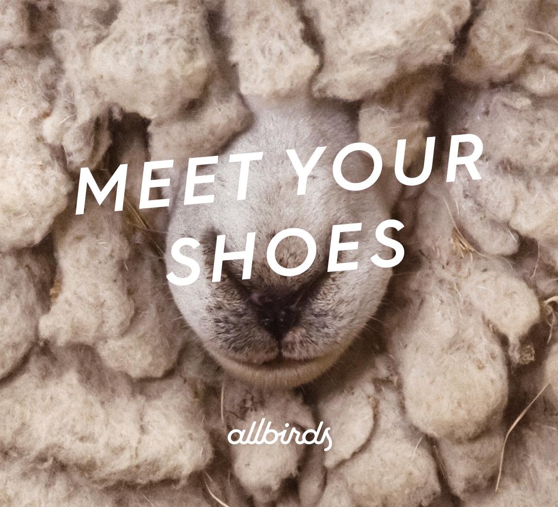 Allbirds | Meet Your Shoes — Cameron C