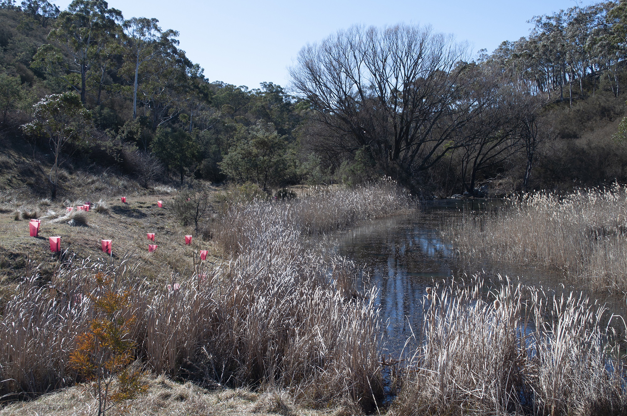 Peter's Pond is still holding water, hydrating the surrounding landscape and trickling downstream.