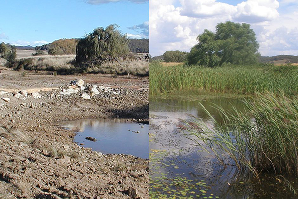 2006 vs 2013: Evidence of landscape rejuvenation at Mulloon Creek Natural Farms in Bungendore NSW.