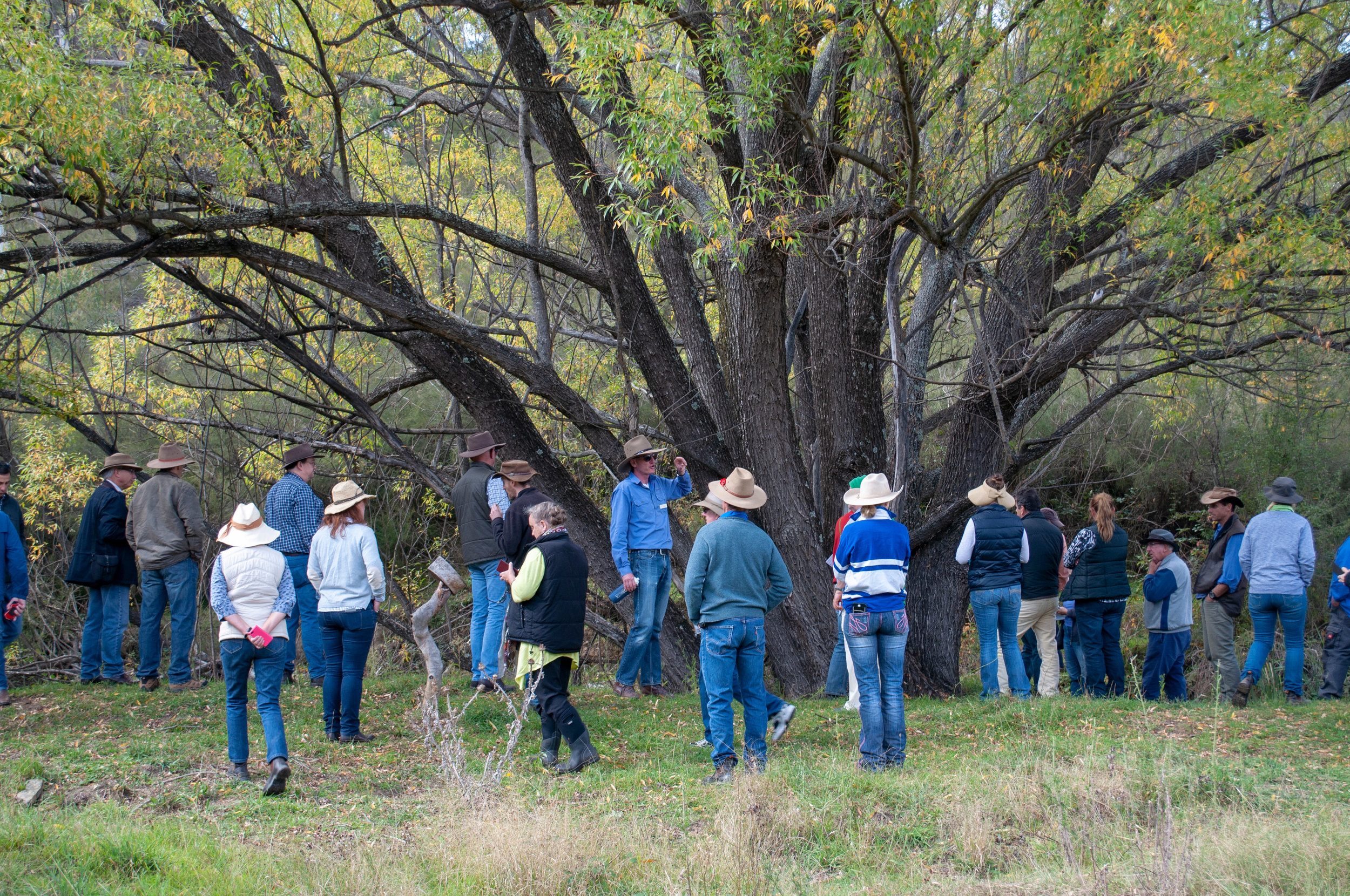 BUY TICKETS for the Mulloon Creek Field Day